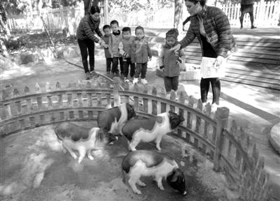 北京某幼儿园建动物园 养殖50多种动物